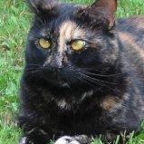 Brown Cat.