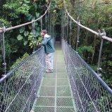 Robin on bridge